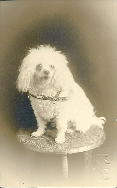 antique dog postcard